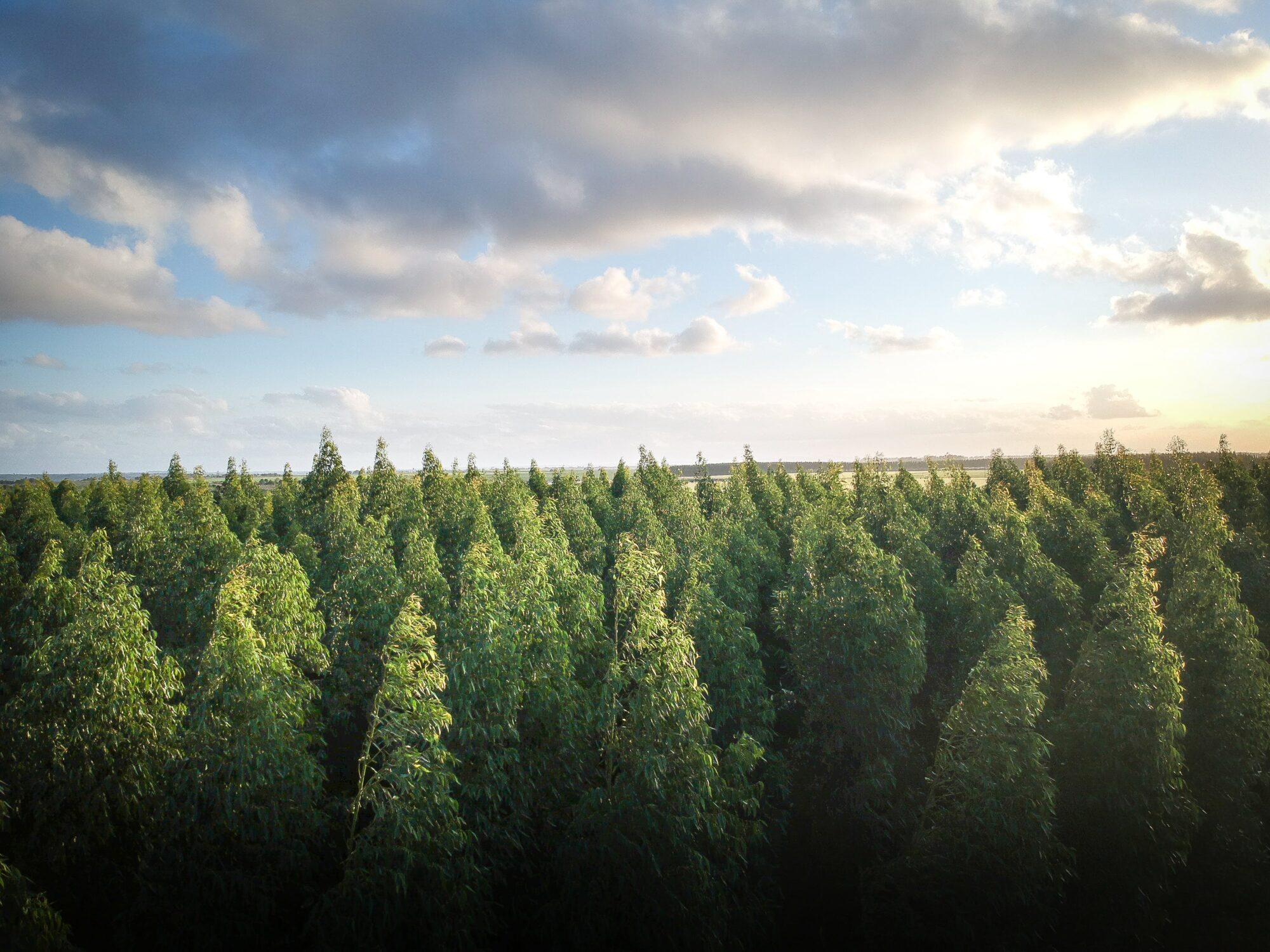 Oświetlony słońcem las a nad nimi błękitno niebo z chmurami.