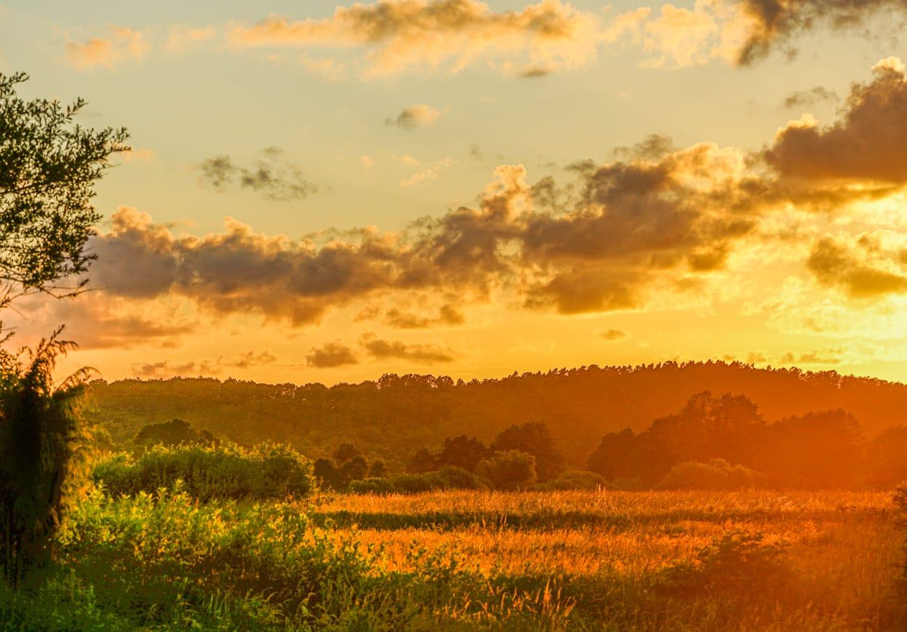 Zachód słońca nad lasem i polaną